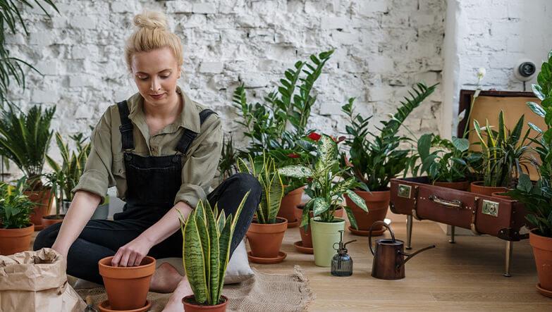 bitkilerin bakımını yapan kadın